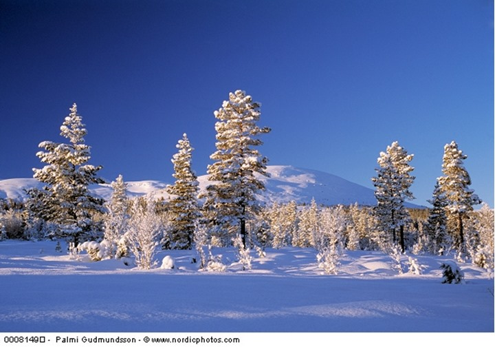 Snowy trees and mountains, Norway