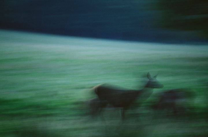 Blurred view of a deer in a forest