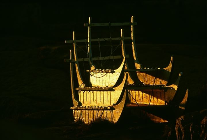 Dog sleds, used as a transportation in Greenland