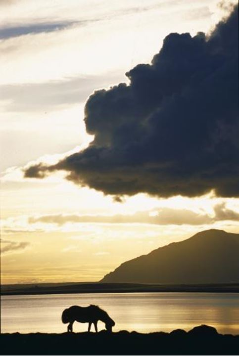 Silhouette of a horse biting grass by a lake or sea at sunset, mountain in background