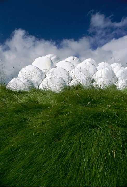 Stack of hay rolls covered with white plastic in a field