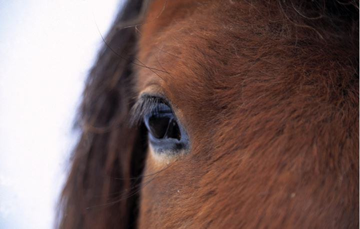 Close-up of a horse`s eye