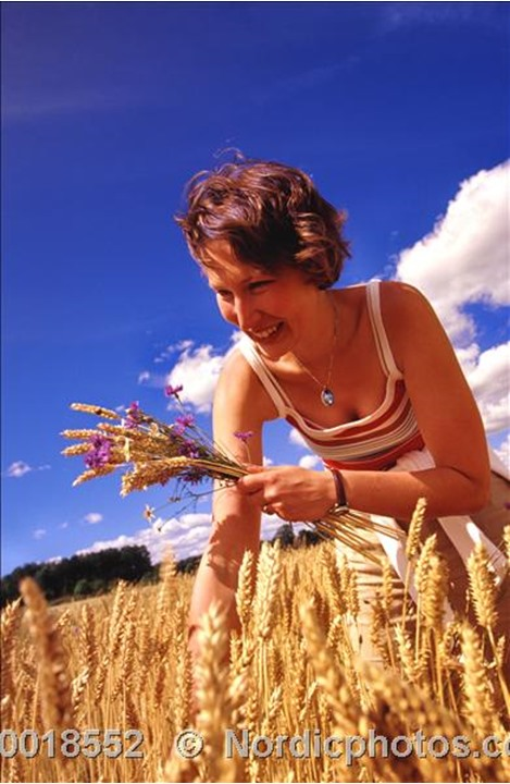 A woman smiling while picking straws in a cornfield,Sodermanland(Södermanland)