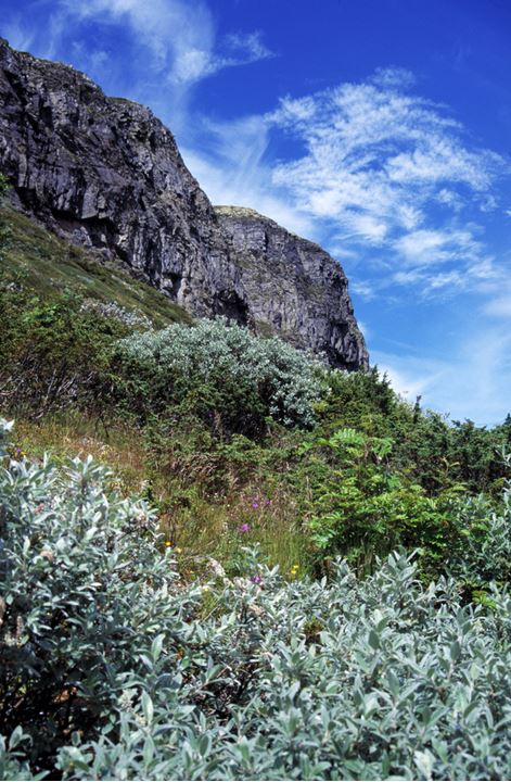 Cliffs surrounded by bushes and other vegetation.