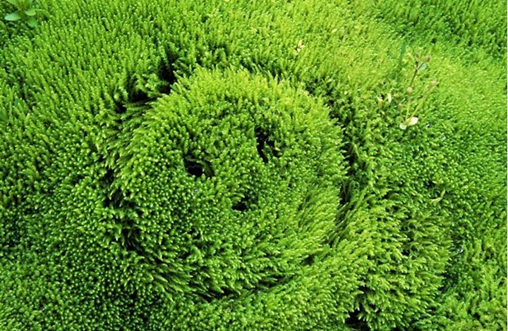 Close-up of a smiley face trimmed on grass