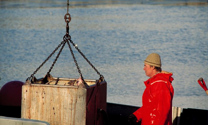 A fisherman watching a fish container being heaved up