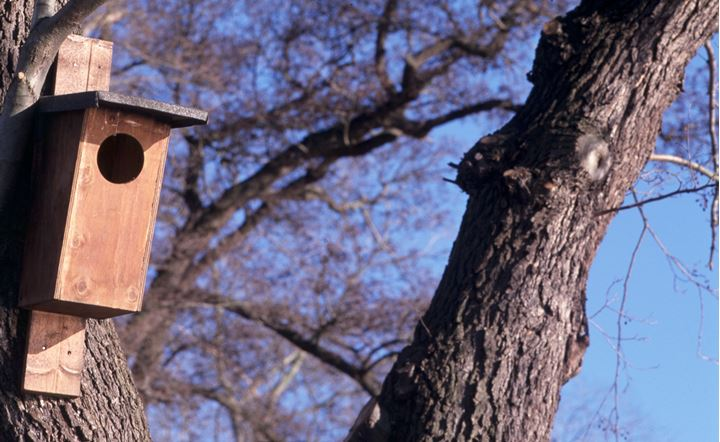 A birdhouse and trees