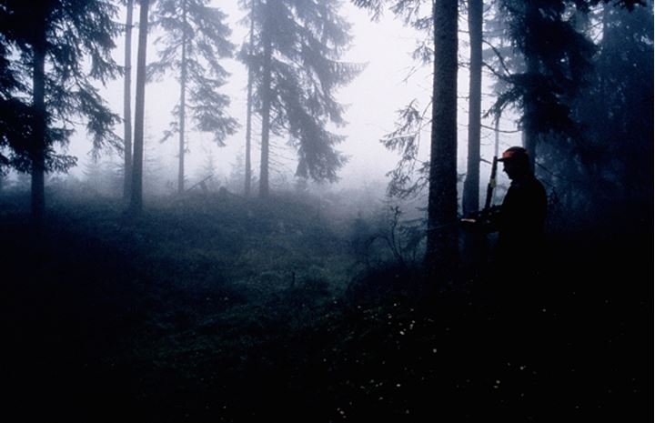Silhouette of trees in a misty forest and one man standing by