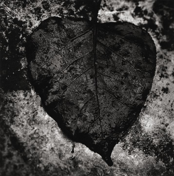 Close-up of a dead leaf