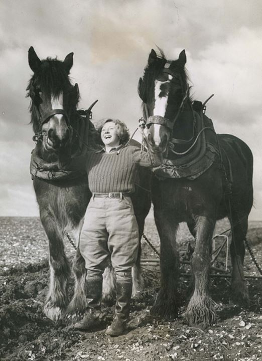 A smiling woman stands between two giant horses