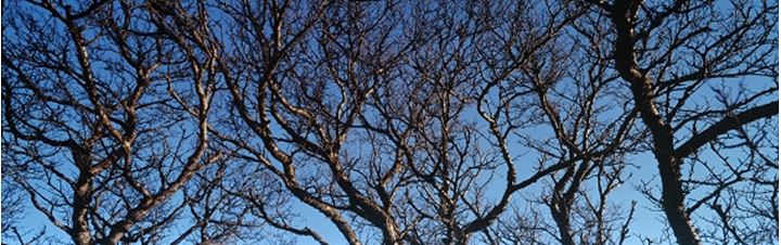 Branches of barren trees