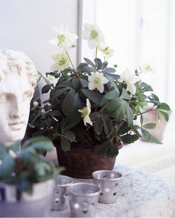 A flower and a statue on a table
