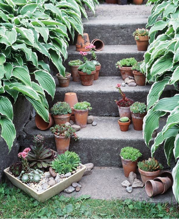 Potted plants on stone steps