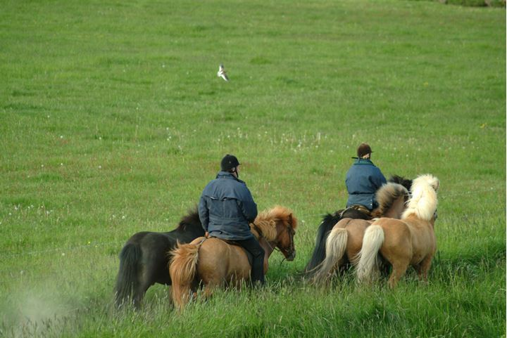 Back of two people horseriding in Iceland