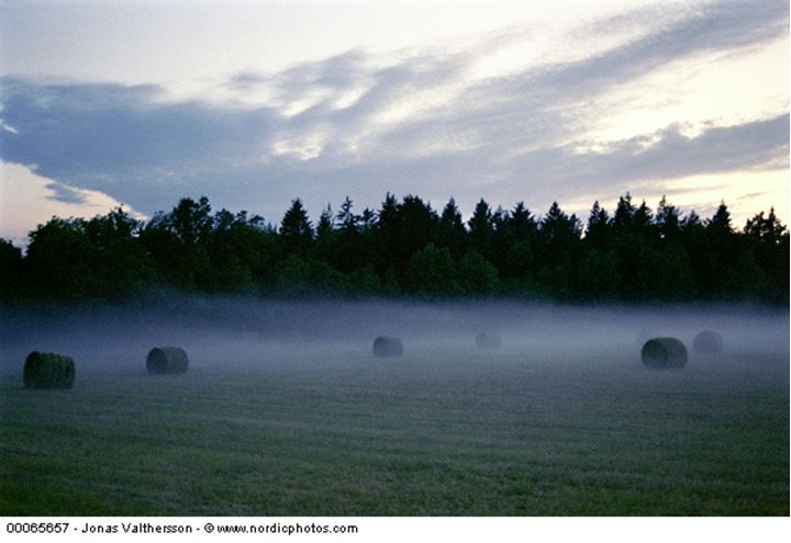 Hay bales in a field in fog at early morning