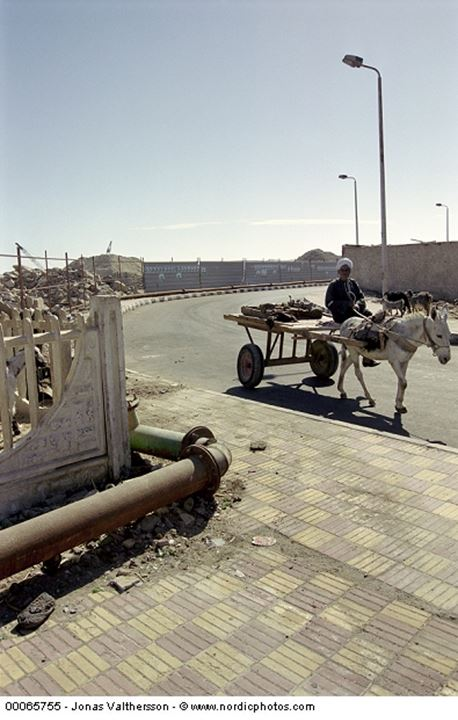 Old man with his donkey in Hurghada Egypt