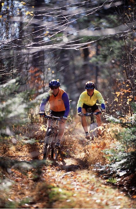 A pair of cyclists driving on a path in a forest
