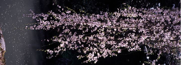 A tree branch with blooming flowers