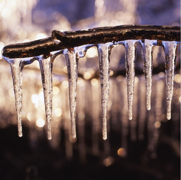 Close-up of icicles hanging on a branch