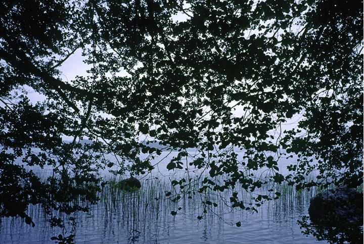 View over a lake through the branches of a tree