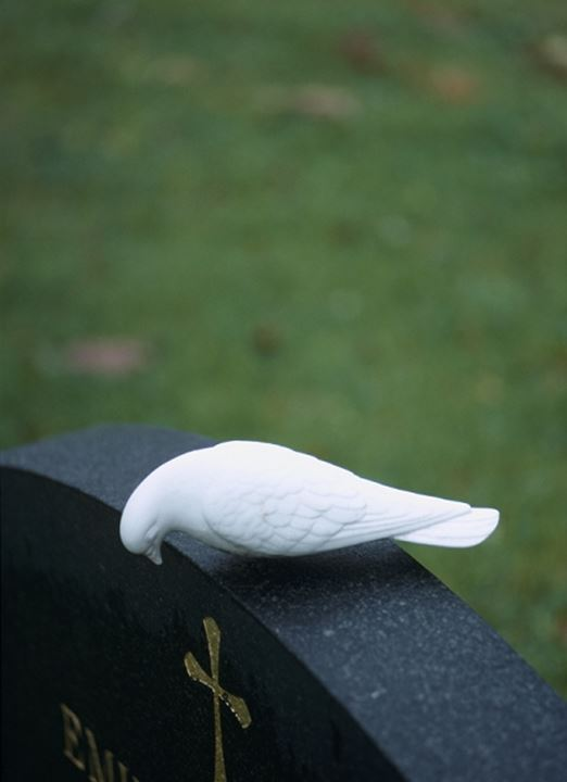 A white pigeon on a black gravestone against green grass
