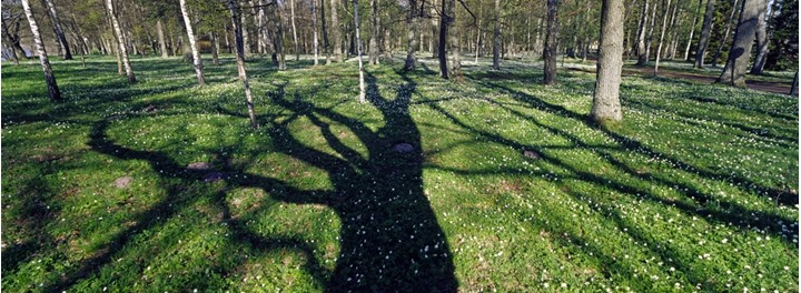 Shadows of trees on a green grass carpet