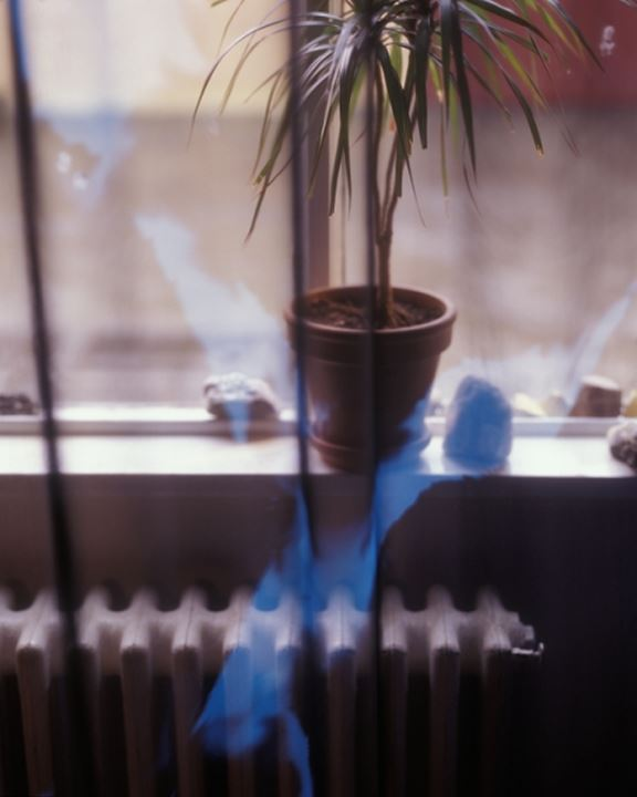 A potted plant in a window sill above a radiator, seen through glass