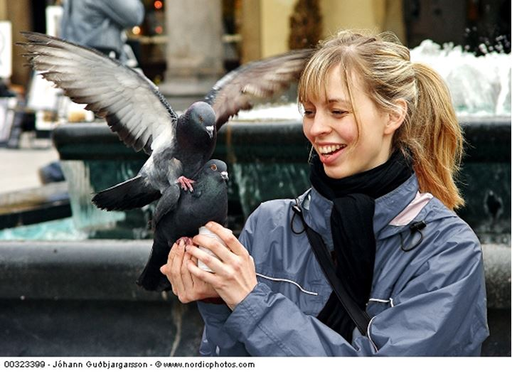 A girl and greedy pigeons