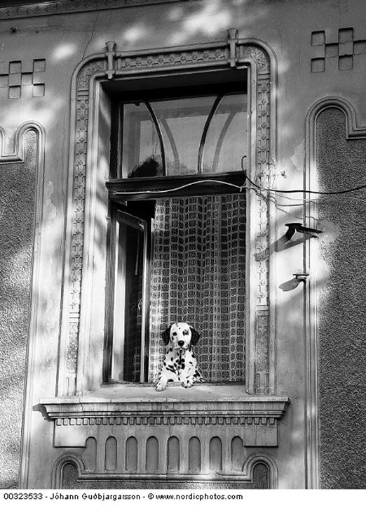 A dog looking out of a window