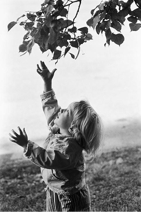 Child reaching for leaves, Sweden