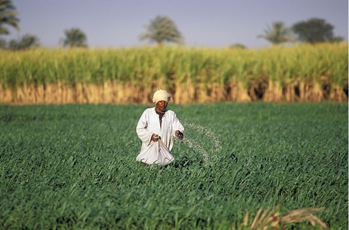 Egypt, Luxor - peasant sowing seed in field