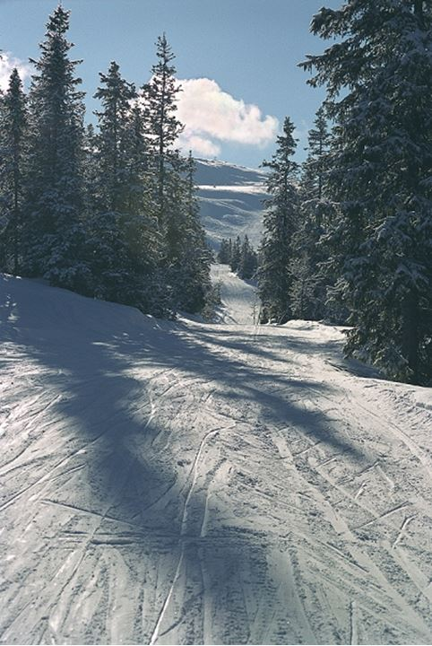 A ski slope and trees in Trysil, Norway