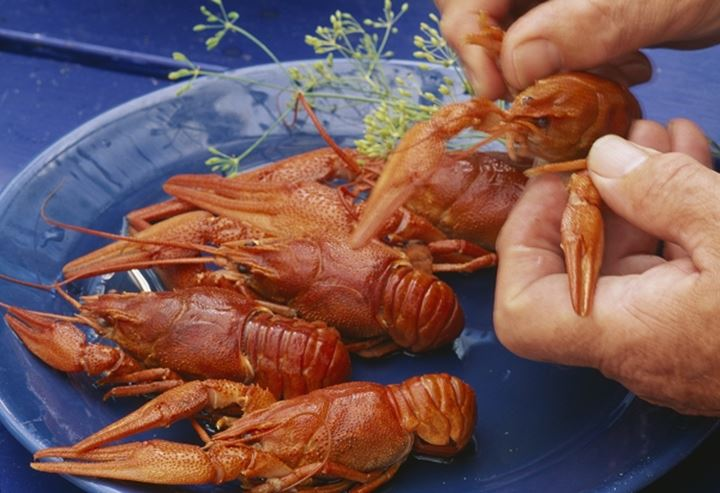 Crayfish on a plate