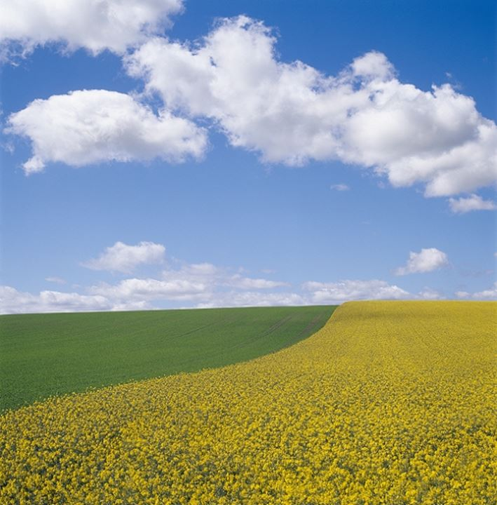 A field in Skane, Sweden
