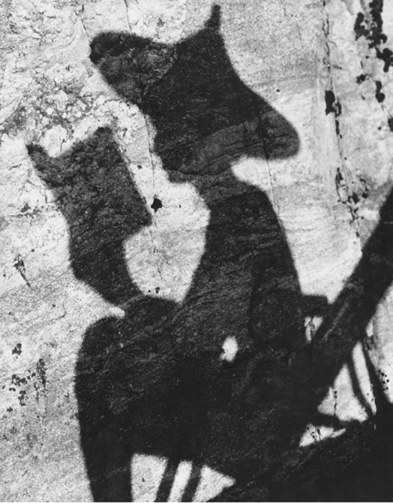Shadow of a person reading a book