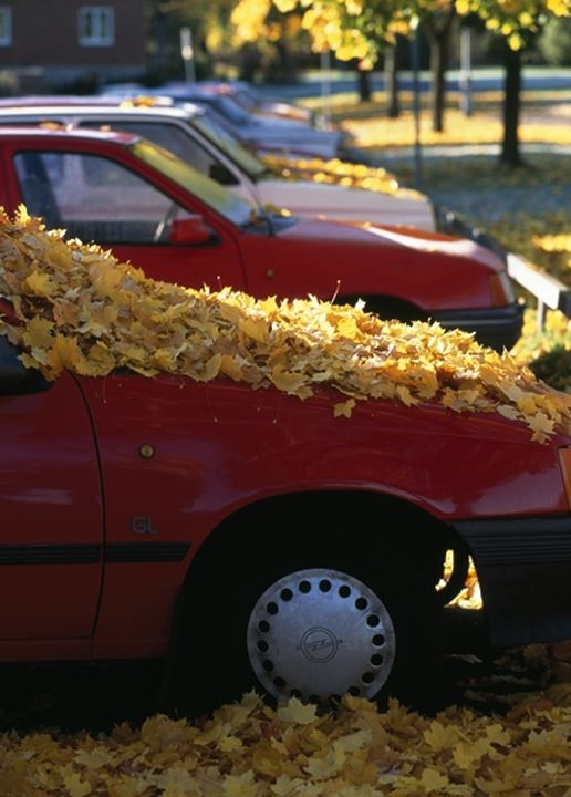 A car with its hood covered by autumn leaves