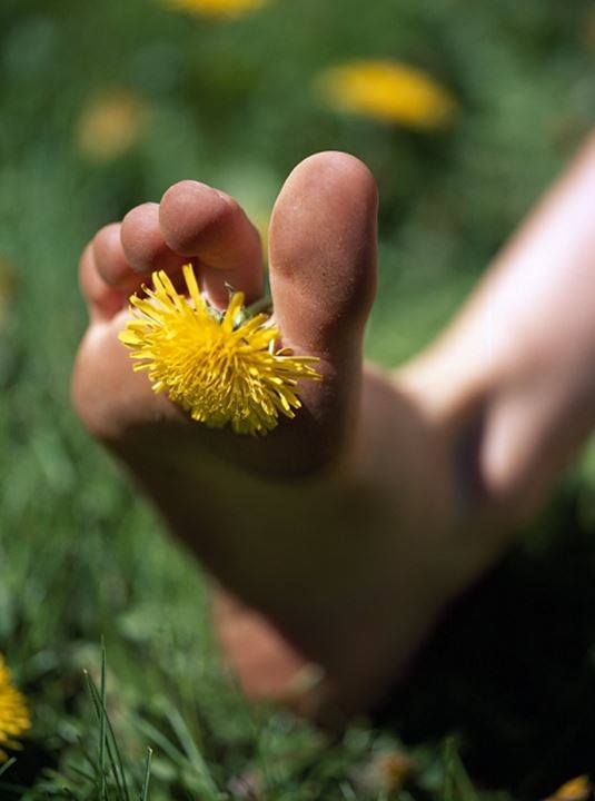 A bare foot with a dandelion between its toes