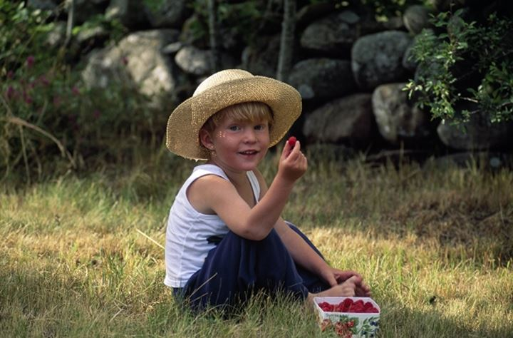 A little boy holding a raspberry. Sweden
