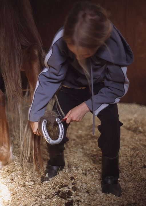 A woman cleaning a horse's hoof