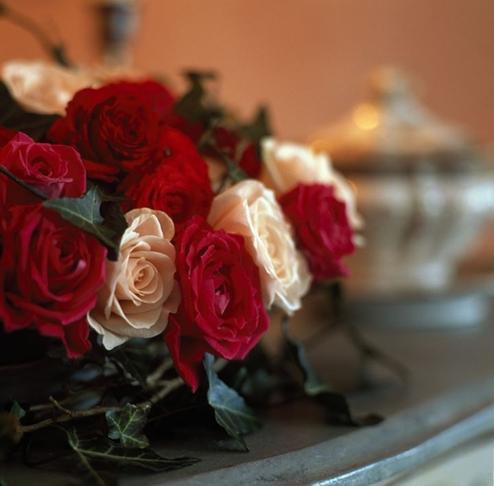 Close-up of a bunch of Roses
