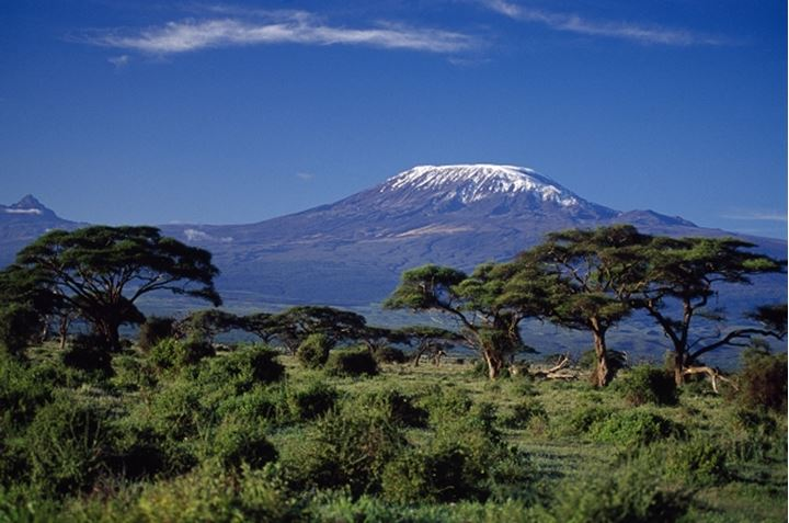 Trees in front of mountains, Mt Kilimanjaro