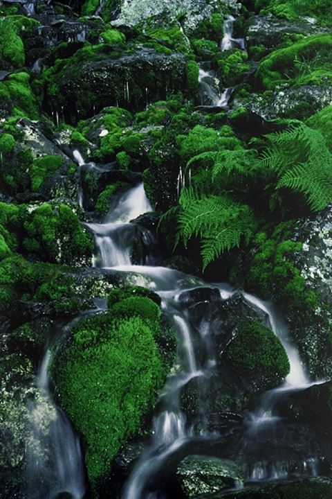 Streams of silver water sliding past mossy rocks in Swedens Arctic Wilderness