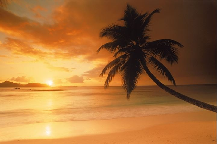 Palm tree on La Digue Island in Seychelles with island of Praslin and setting sun on horizon