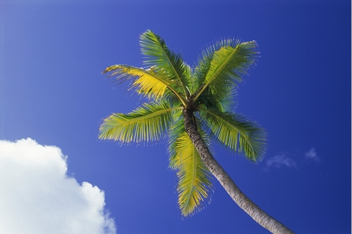 One palm tree against blue sky with cloud