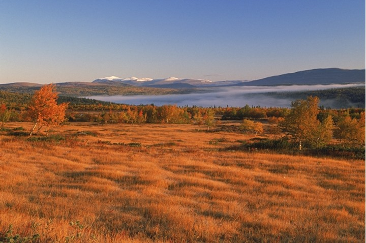 Autumn colors in moutains of Northern Sweden at sunrise