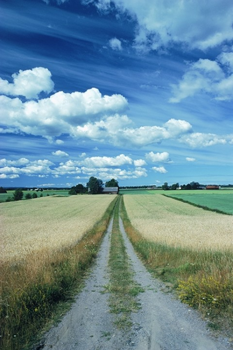 Straight country dirt road through wheat fields of Vestergotland in Sweden