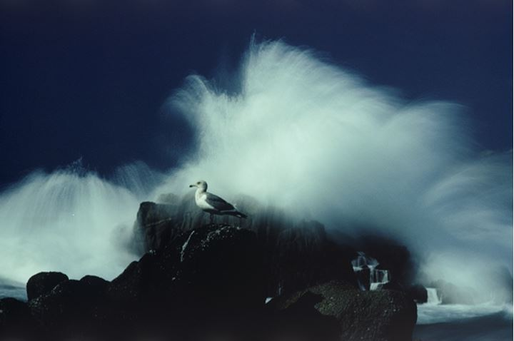 Wave hitting rocks with seagull along Big Sur in California