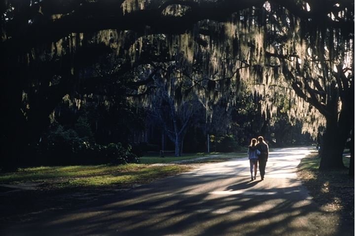Couple walking under cypress tree with hanging Spanish moss in South Carolina