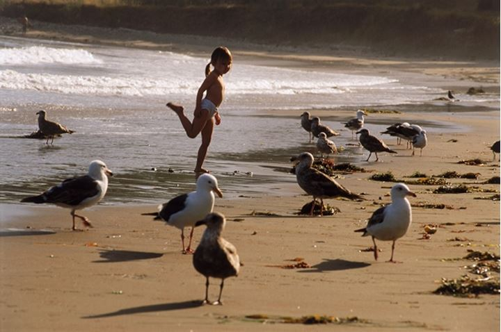 Four year old girl standing like a shorebird in California