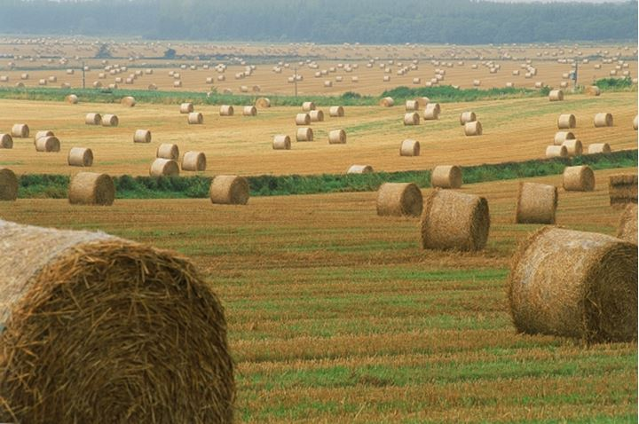 Fields of rolled hay on farms in Scotland